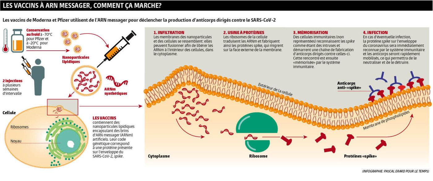 Levaccin contre le coronavirus ne sera-t-il pas efficace dans les cas de surpoids infectés?